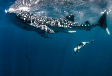 Olisticmap - EPIC RETREATS alla scoperta della Saggezza degli Squali Balena