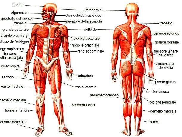 Olisticmap - Corso di Anatomia Esperienziale