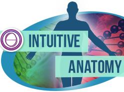 Olisticmap - ThetaHealing Anatomia Intuitiva