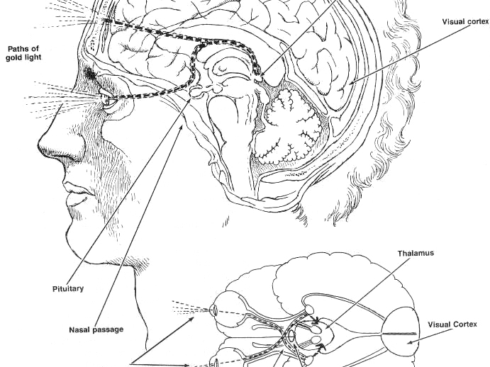 Olisticmap - Pineale: fisiologia, spiritualità, Kinesiologia e pratica connessa