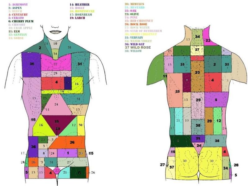 Olisticmap - FIORI di BACH sul corpo - Floriterapia Zonale