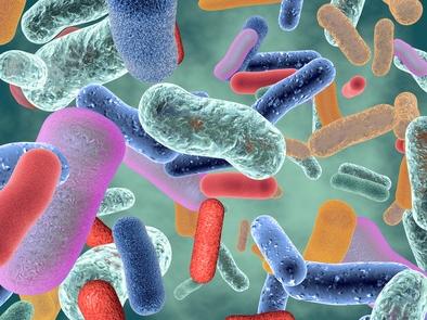 Olisticmap - il super organismo uomo- batteri