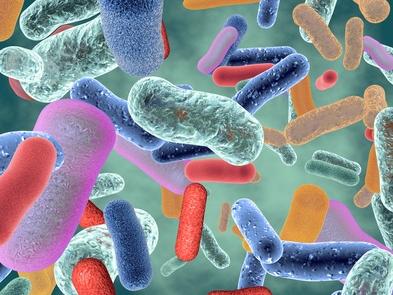 Olisticmap - il microbiota