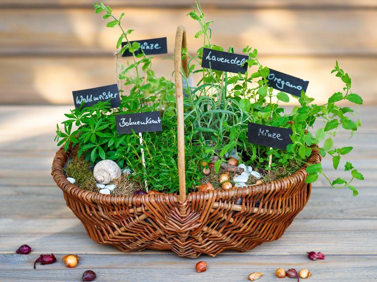 Olisticmap - corso di raccolta delle erbe spontanee