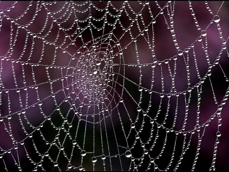 Olisticmap - La tela de ragno