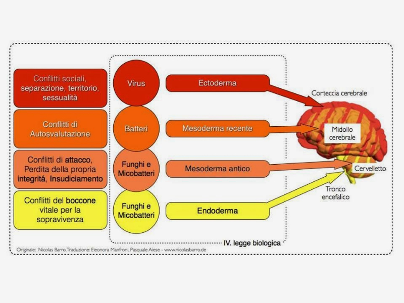 Olisticmap - Psicobiologia - Le 5 leggi del dottor Hamer