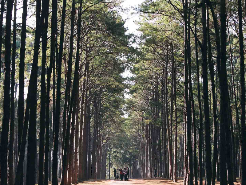 Olisticmap - Percorso Shinrin-Yoku: Il Bagno Di Foresta Ritiro Di Meditazione Nel B