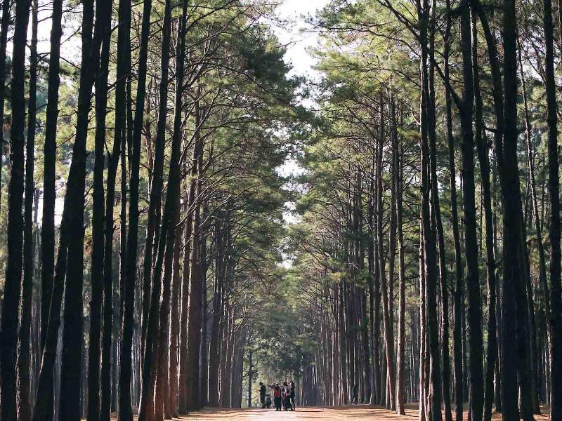 Olisticmap - Percorso Shinrin-Yoku: Il Bagno Di Foresta