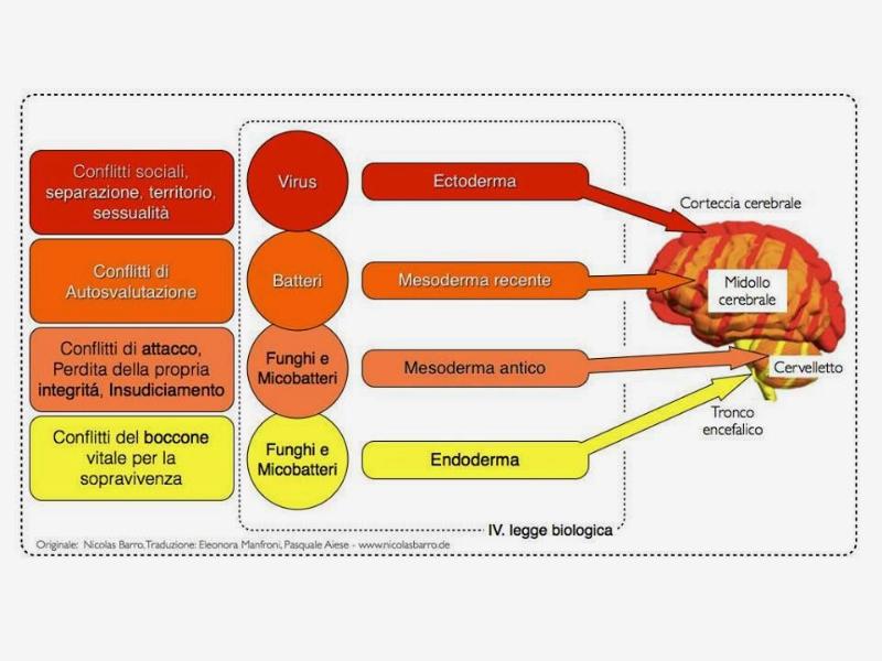 Olisticmap - Psicobiologia - Le 5 leggi del dottor Hamer  *anche online