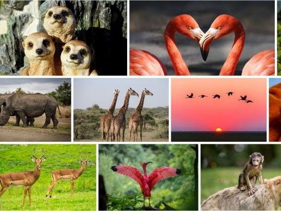 Olisticmap - Il Regno Animale e il suo significato profondo: teoria e pratica – Cor