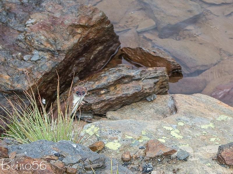 OlisticMap - Tra camosci, stambecchi e marmotte
