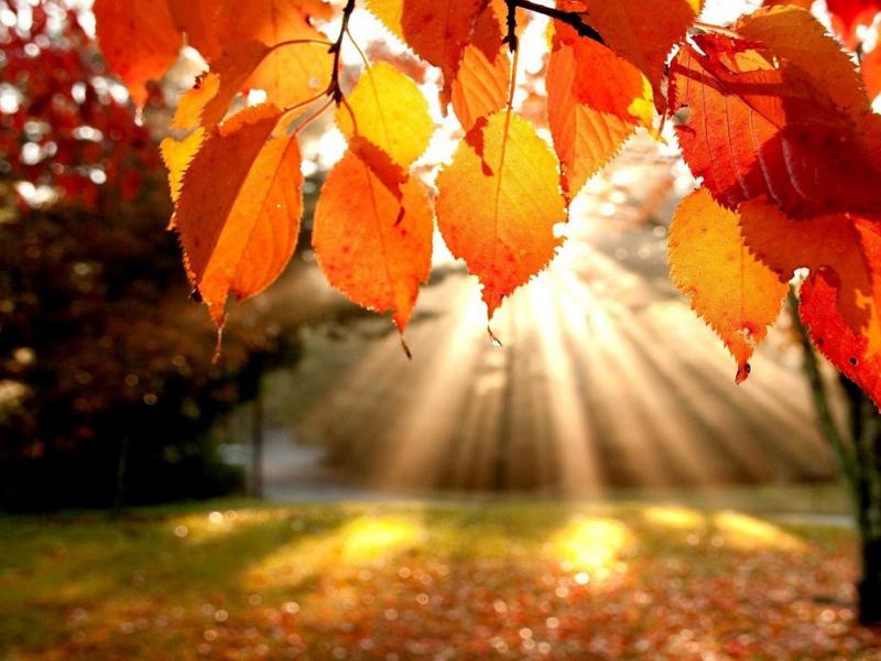 Olisticmap - Accogliamo la calma dell'autunno