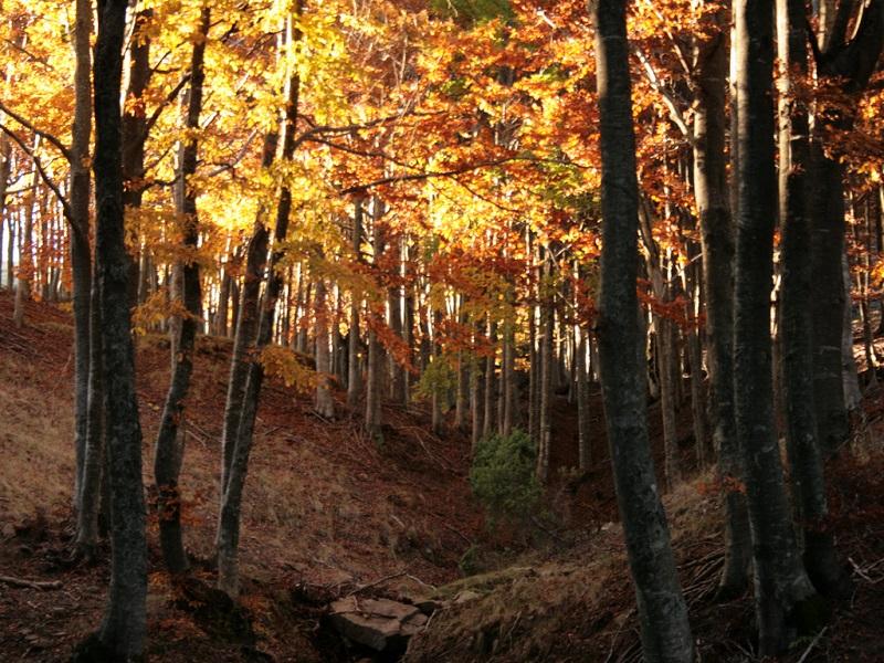 OlisticMap - I Colori d'autunno