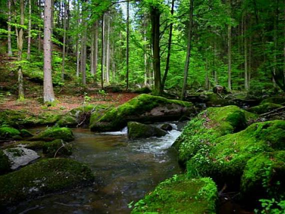 OlisticMap - Il Risveglio della Foresta